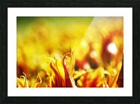 Flower Touch Picture Frame print