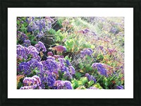 Purple Wild Flowers in Dana Point CA Picture Frame print
