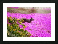 Pink Wild Flowers on a Hill With a Squirrel Picture Frame print
