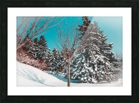Snowy Pine Trees Picture Frame print
