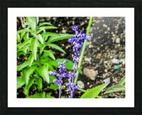 DSCN0817 Picture Frame print