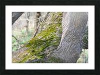 DSC_0223 Picture Frame print
