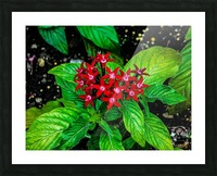 Beauty in the Flower Picture Frame print