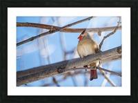 Madame Cardinal Picture Frame print