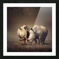 Two Rhinoceros with birds Picture Frame print