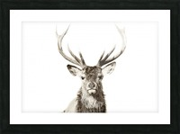 Cerf rouge Picture Frame print