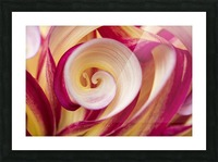 Spirales Picture Frame print