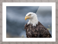 Portrait of an Eagle Picture Frame print