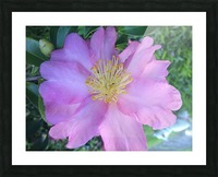 LOTUS DREAMING Picture Frame print