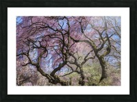 Abstract Cherry Blossom tree Picture Frame print