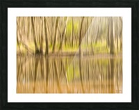 forest park reflections Picture Frame print