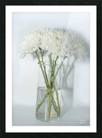 Mum Flower in a Vase Picture Frame print
