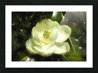 Magnolia Picture Frame print