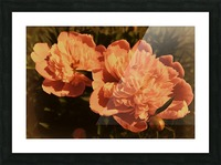 Vintage Peonies Picture Frame print