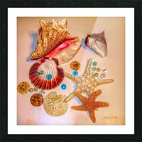 Sea Treasures Picture Frame print