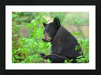 3646-Bear Lunch Picture Frame print