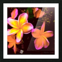 Frangipanis On The Glow Picture Frame print