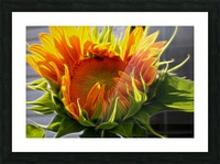 Glowing Sun Picture Frame print