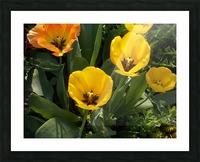DSCN0763 Picture Frame print