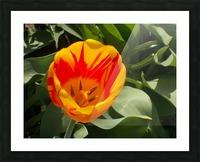 DSCN0767 Picture Frame print