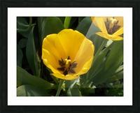 DSCN0764 Picture Frame print