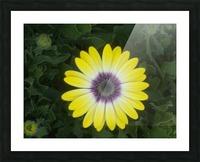 DSCN0662 Picture Frame print