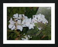 DSCN0570 Picture Frame print