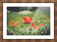 Field of Poppies Picture Frame print