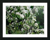 DazzleBlossoms Picture Frame print