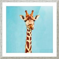 Giraff Picture Frame print