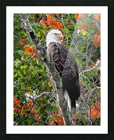 AutumnEagle Picture Frame print