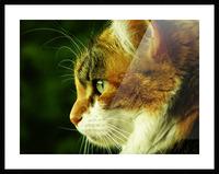 sofn-ECA50C68 Picture Frame print