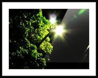 sofn-12072B59 Picture Frame print