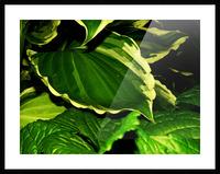 sofn-4312BAF0 Picture Frame print