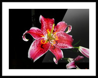 sofn-356C0972 Picture Frame print