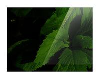 F (11) Impression et Cadre photo