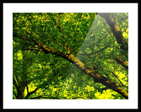 sofn-C1F96356 Picture Frame print