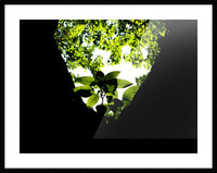 sofn-5DA369EA Picture Frame print