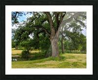 Oak Tree Picture Frame print