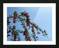 Summer Bounty Picture Frame print