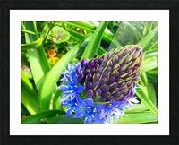 Blue Flower Picture Frame print