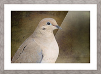 Mourning Dove Picture Frame print