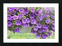 Beautiful Purple Flowers Photograph Picture Frame print