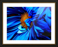 Beautiful Blue Flower_OSG Picture Frame print