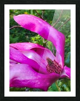 Peaceful pink  Impression et Cadre photo