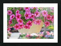 Beautiful Pink Flowers Photograph Picture Frame print