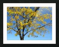 Beautiful Yellow Fall Foliage Picture Frame print