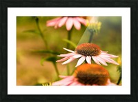 Like Sunflowers Picture Frame print