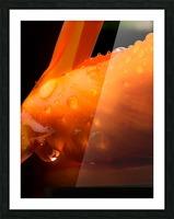 Sweet Orange sweat Impression et Cadre photo