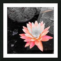 Lotus Impression et Cadre photo